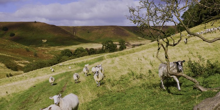 North Yorkshire Moors holiday